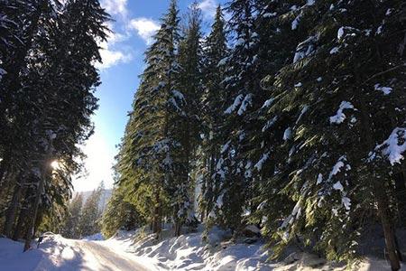 Revelstoke Nordic Trails