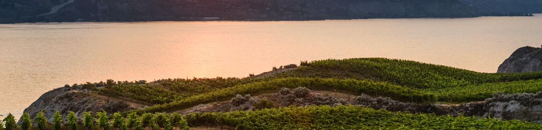 Okanagan Wine Tasting Tours from Revelstoke