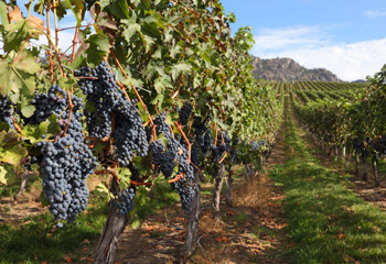 Okanagan Wine Tasting & Tour