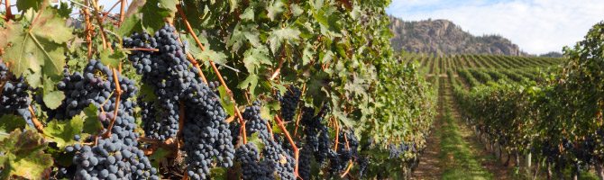 Discover Wine - Okanagan