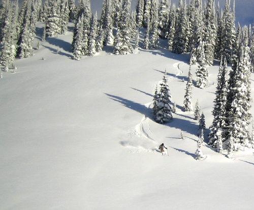 Cat Skiing in the Selkirk Mountain Range