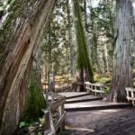 Giant-Cedars-boardwalk_Photo-Rob-Buchanan