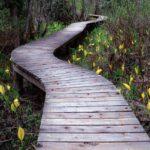 Mt-Revelstoke_Skunk-Cabbage-boardwalk