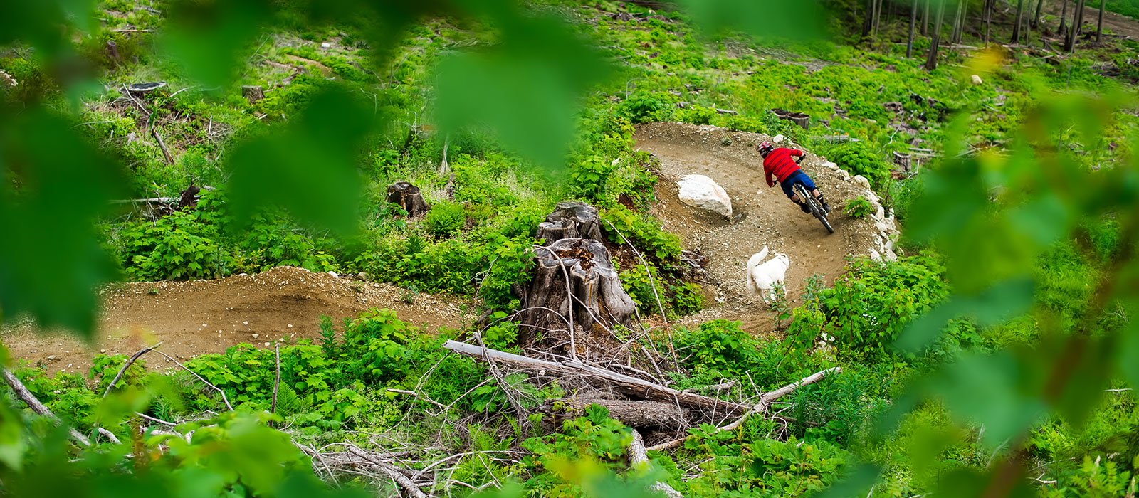 Revelstoke Mountain Bike Tours